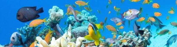 Panama snorkeling tour