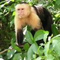 Corporate tour to monkey island