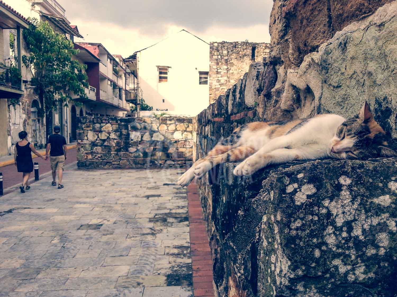 Casco-Viejo-cat