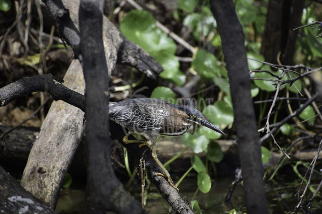 birds-in-panama-jungle