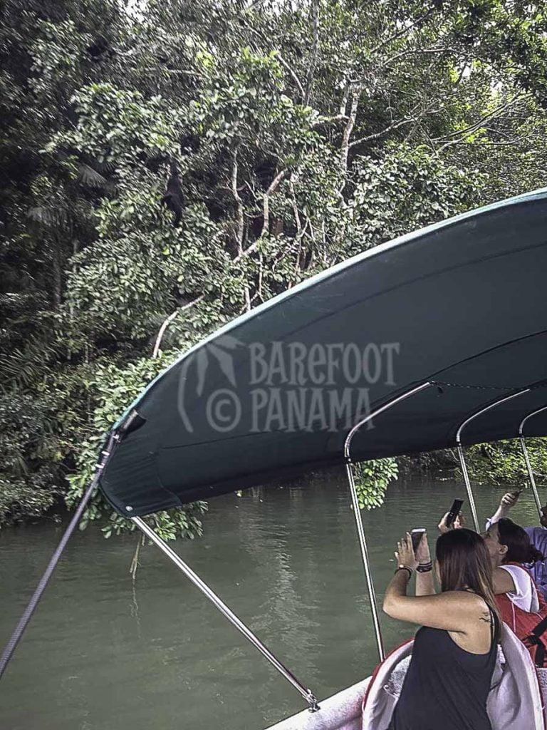 boat-tour-of-panama-jungle