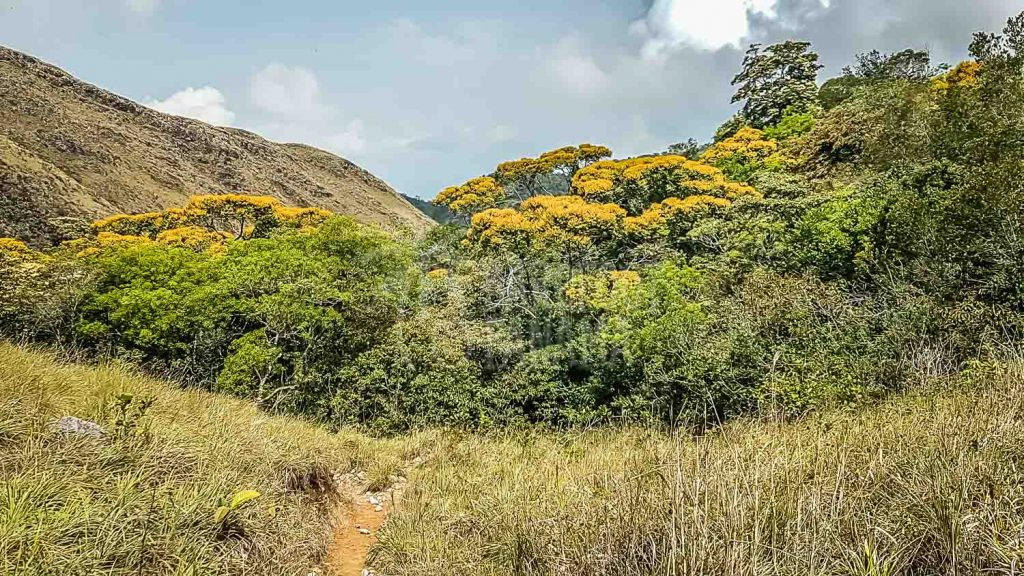 cocle-mountains