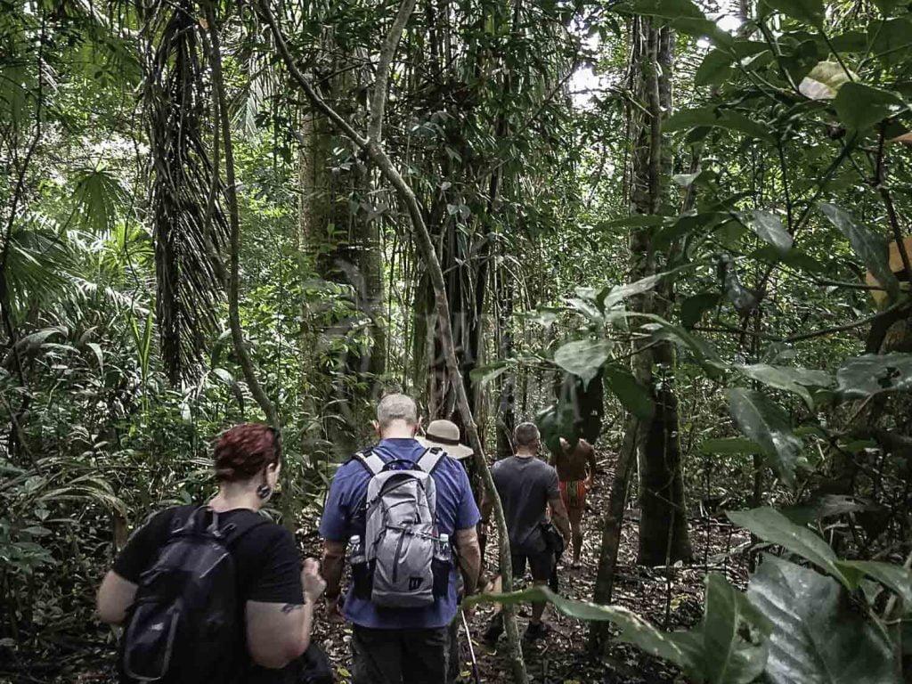 jungle-trek-tour