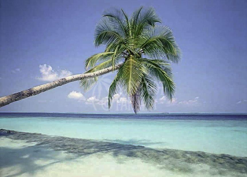 palm-tree-at-san-blas