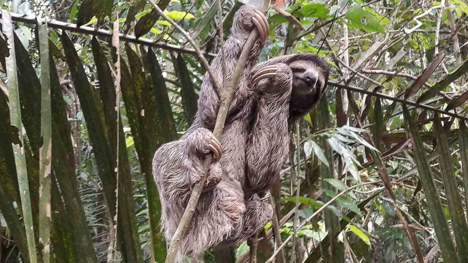 seeing a sloth in the jungle on a Panama day tour